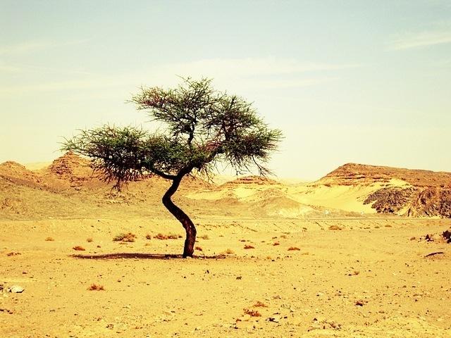 desert-areas-10