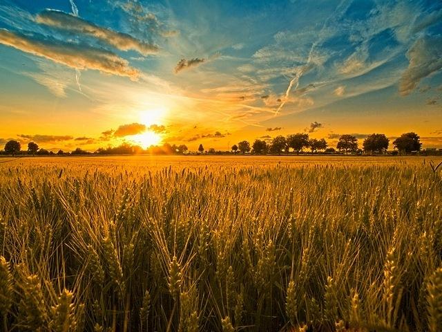 rural-scenes-04
