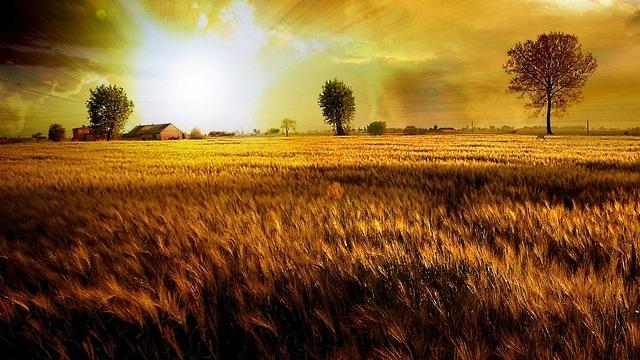rural-scenes-05