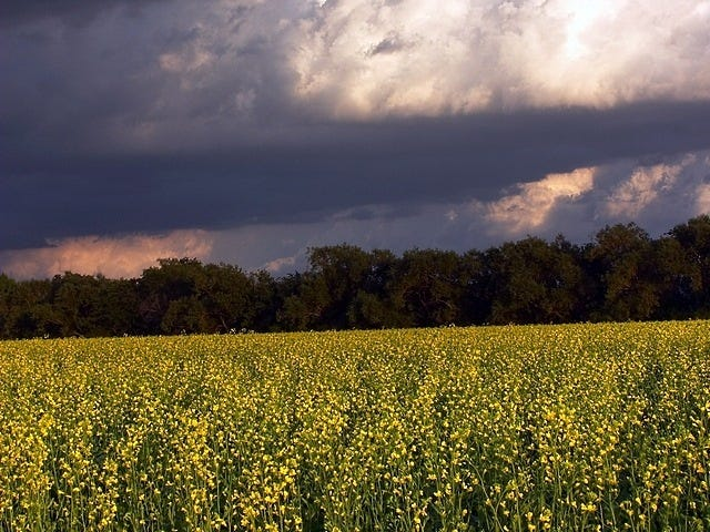 rural-scenes-07