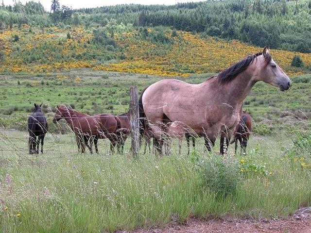 horses-04
