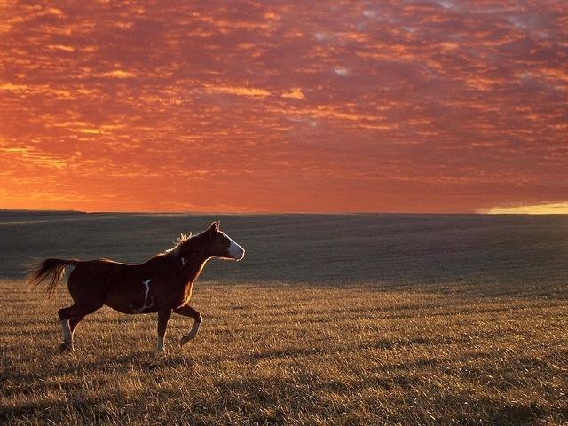 horses-06