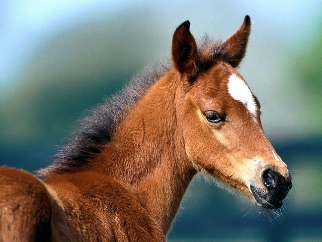 horses-08