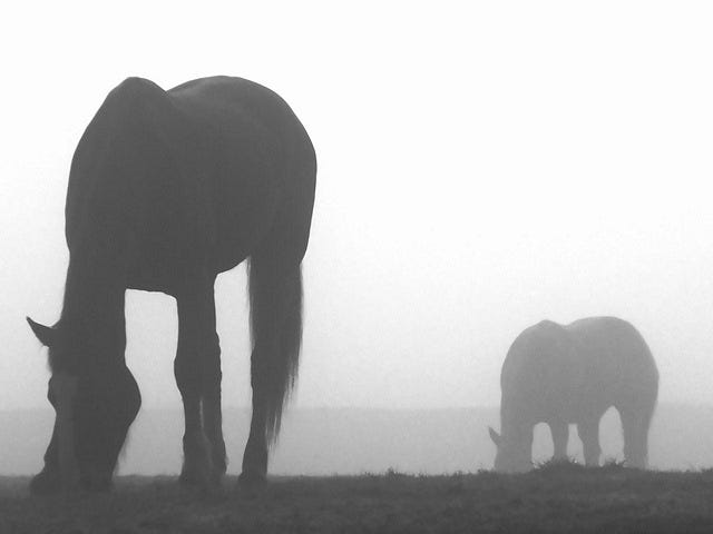 horses-09