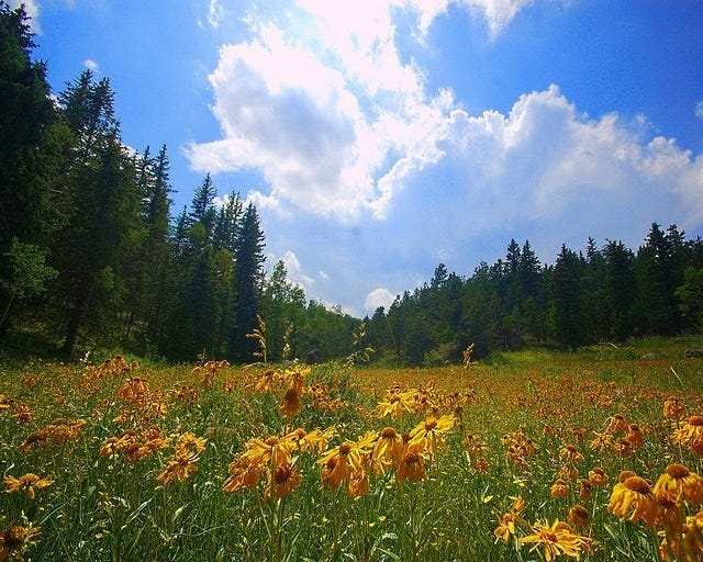 meadows-02