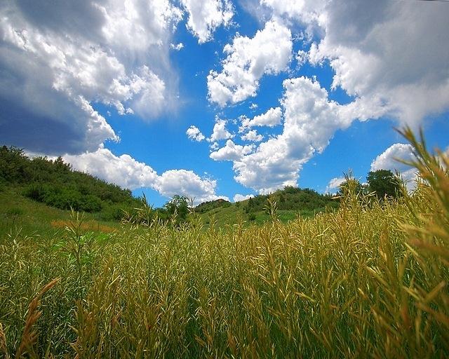 meadows-03