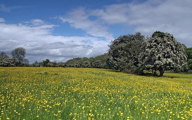 meadows-04