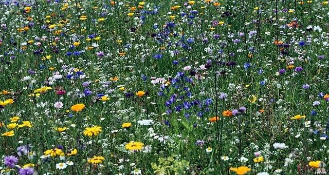 meadows-07