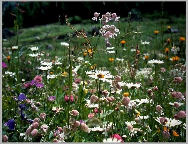 meadows-08