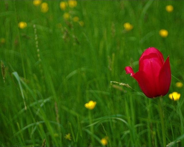meadows-11