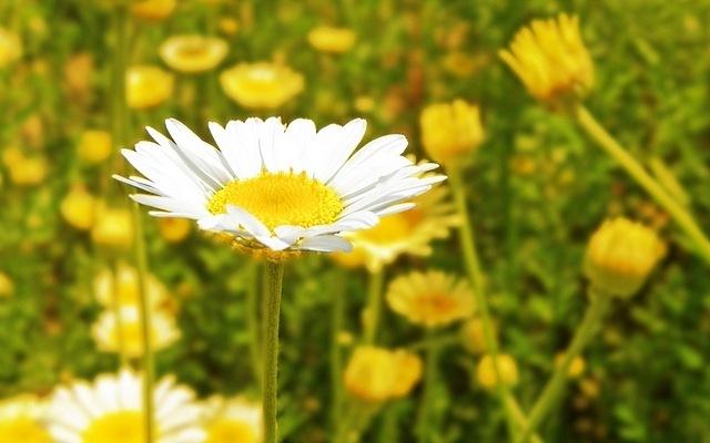 meadows-12