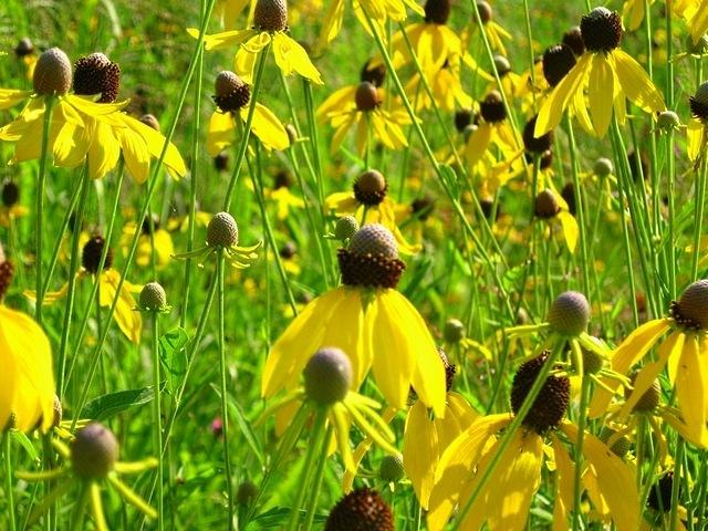 meadows-13