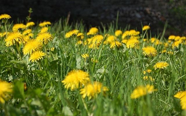 meadows-14