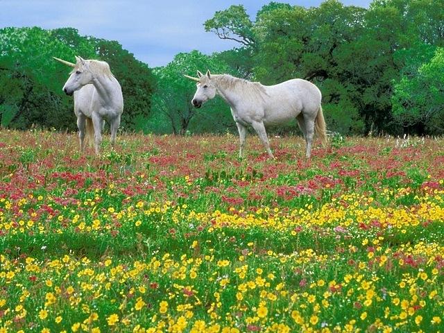 meadows-15