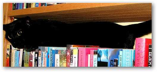 kitty-in-the-books