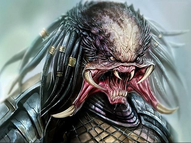 predator-05
