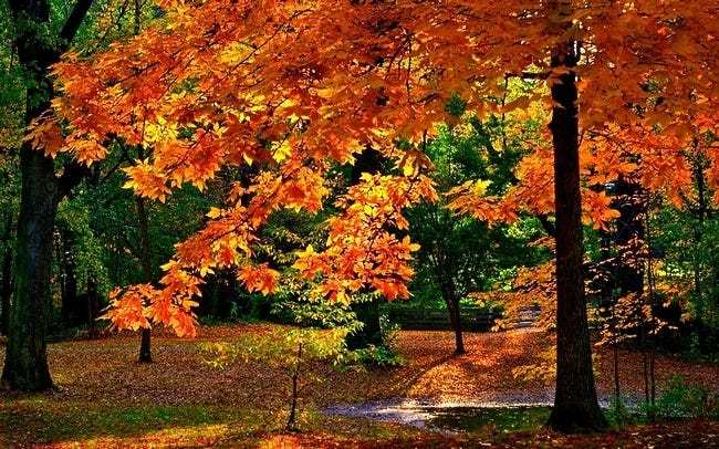 colors-of-autumn-11