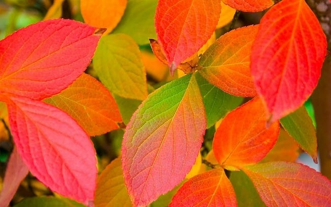 colors-of-autumn-15