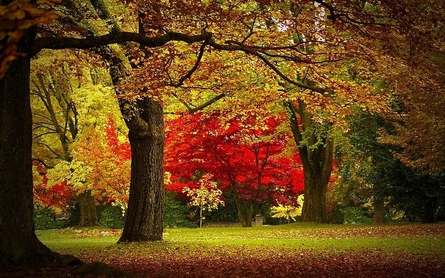 colors-of-autumn-10