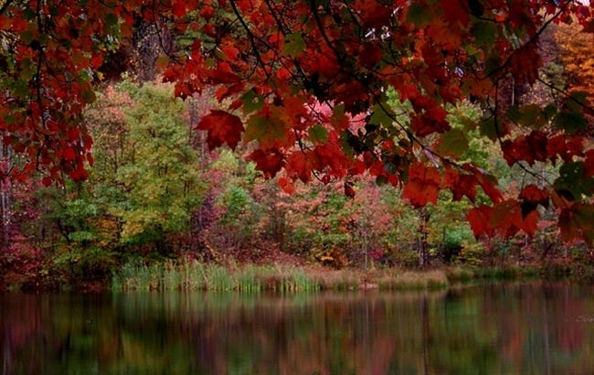 colors-of-autumn-13