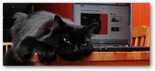 black-cat-and-laptop