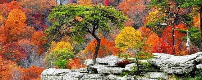 colors-of-autumn-00.png