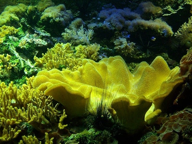 coral-reefs-14