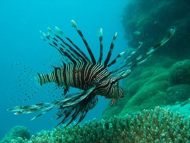 coral-reefs-03
