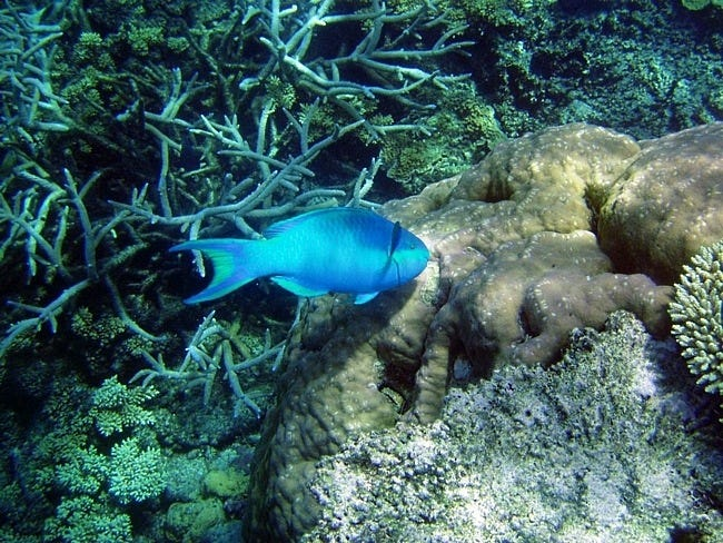 coral-reefs-05