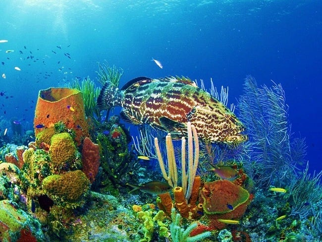 coral-reefs-07