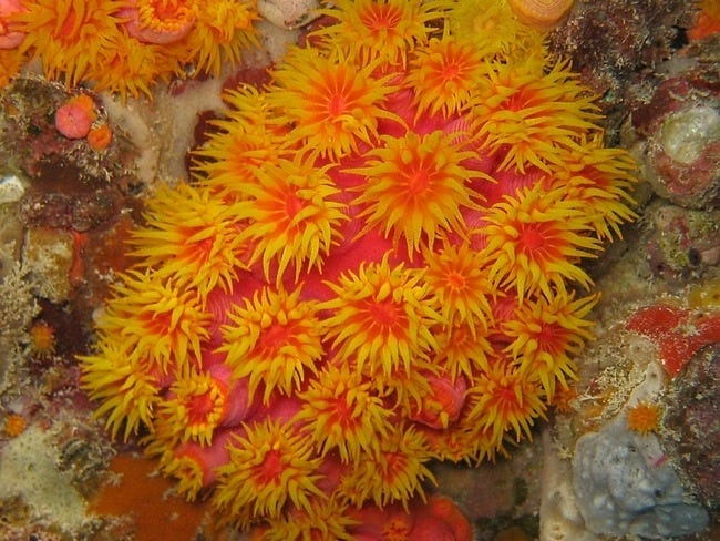 coral-reefs-15