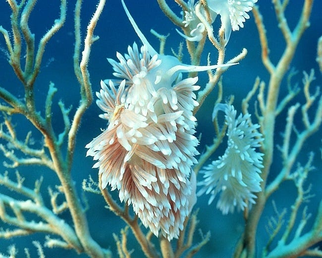 coral-reefs-11