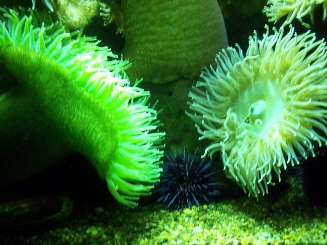 coral-reefs-01