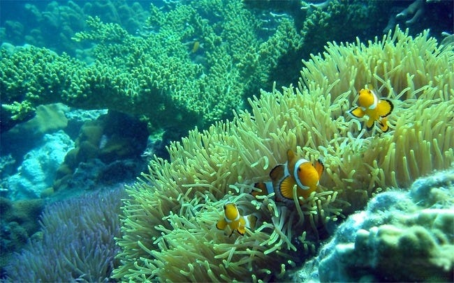coral-reefs-02