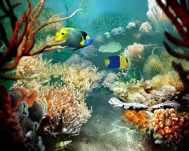 coral-reefs-04