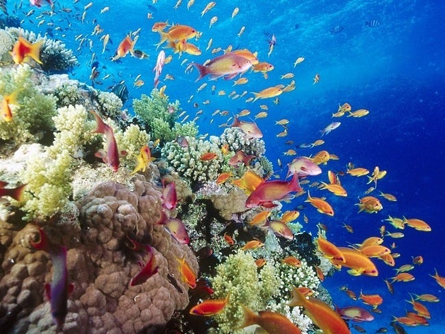 coral-reefs-08