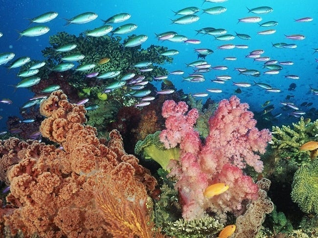 coral-reefs-09