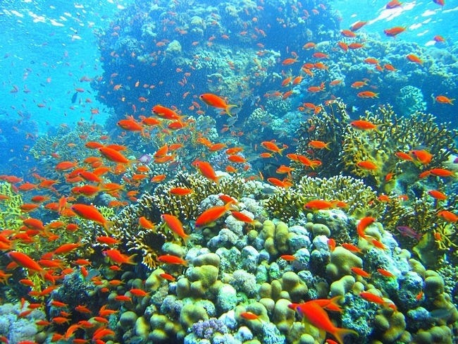 coral-reefs-10
