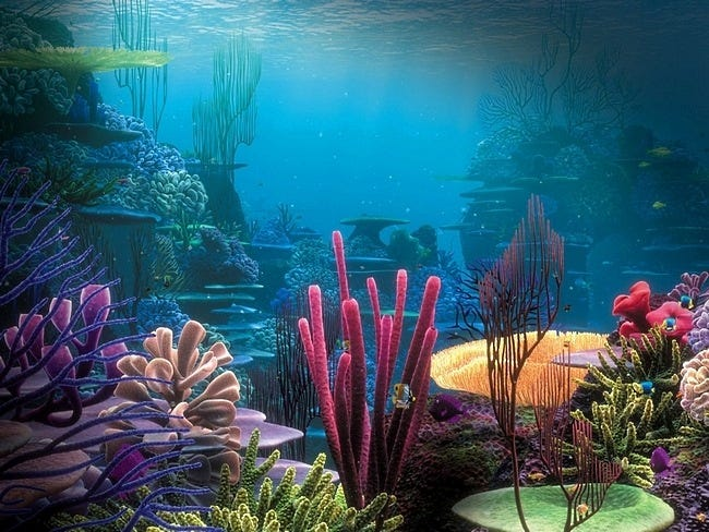 coral-reefs-12