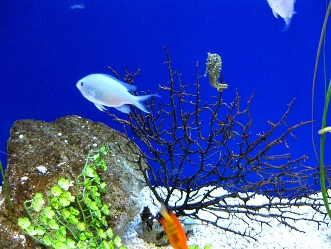 coral-reefs-13