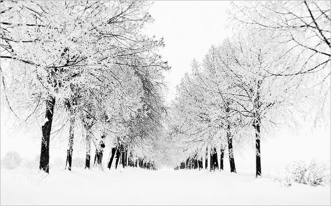 snow-covered-trees-06