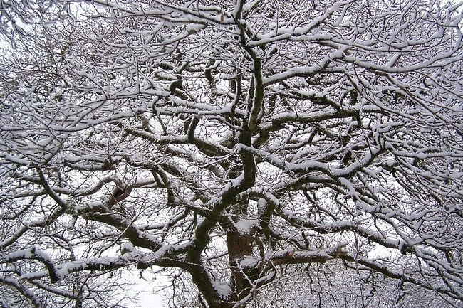 snow-covered-trees-02