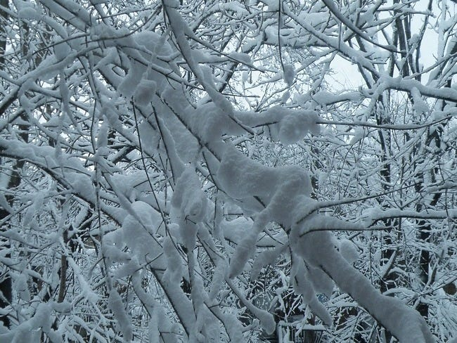 snow-covered-trees-01