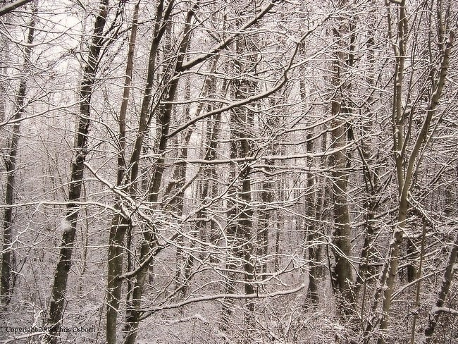 snow-covered-trees-04