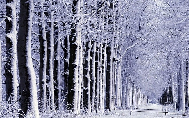 snow-covered-trees-07