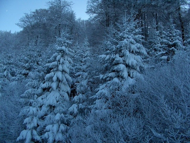 snow-covered-trees-12