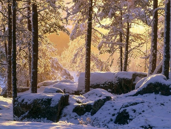snow-covered-trees-13