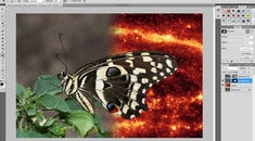 How To Use Layer Masks and Vector Masks to Remove Complex Backgrounds in Photoshop