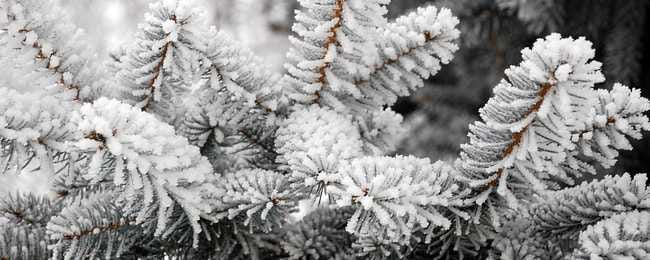 snow-covered-trees-00