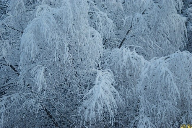 snow-covered-trees-03